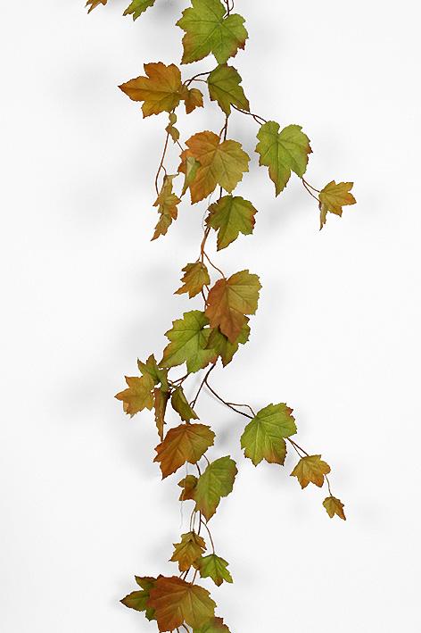 Рисунки лиан винограда